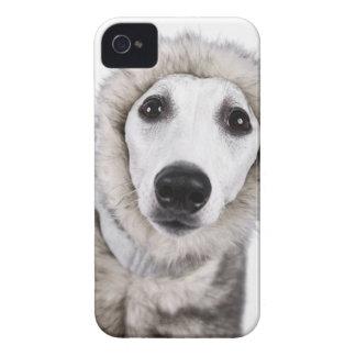 Whippet dog wearing fur coat, studio shot iPhone 4 Case-Mate cases