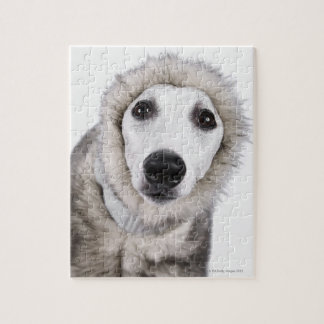 Whippet dog wearing fur coat, studio shot jigsaw puzzle