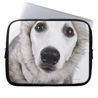 Whippet dog wearing fur coat, studio shot laptop sleeve