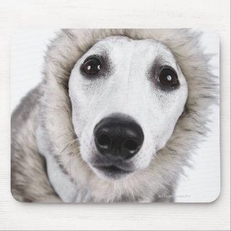 Whippet dog wearing fur coat, studio shot mouse mat