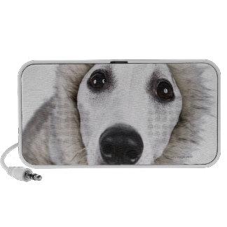 Whippet dog wearing fur coat studio shot iPod speakers