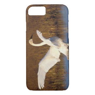 whistling swan, Cygnus columbianus, stretching iPhone 7 Case