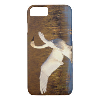 whistling swan, Cygnus columbianus, stretching iPhone 8/7 Case