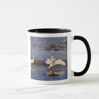 whistling swan, Cygnus columbianus, stretching Mug