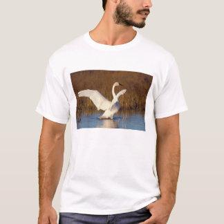 whistling swan, Cygnus columbianus, stretching T-Shirt