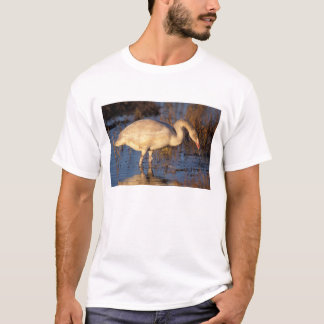 Whistling swan juvenile eating roots, 1002 T-Shirt