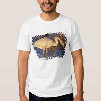 Whistling swan juvenile eating roots, 1002 tees