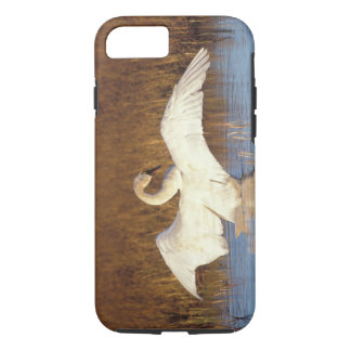 Whistling swan or tundra swan, stretching its iPhone 7 case