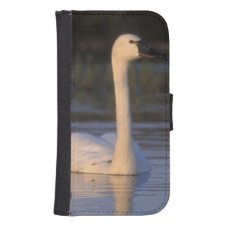 Whistling swan or tundra swan, swimming in the samsung s4 wallet case