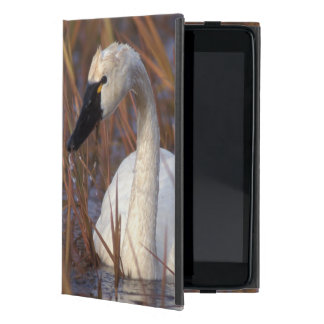 Whistling swan swimming in a pond, 1002 Coastal Cover For iPad Mini