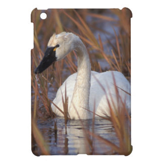Whistling swan swimming in a pond, 1002 Coastal Cover For The iPad Mini