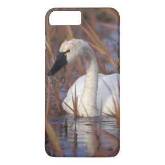 Whistling swan swimming in a pond, 1002 Coastal iPhone 8 Plus/7 Plus Case