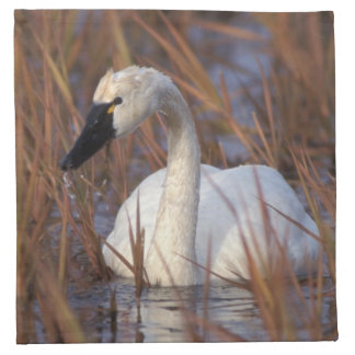 Whistling swan swimming in a pond, 1002 Coastal Napkin