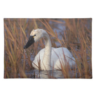 Whistling swan swimming in a pond, 1002 Coastal Placemat