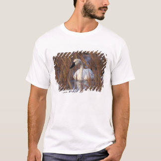 Whistling swan swimming in a pond, 1002 Coastal T-Shirt
