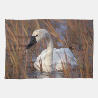 Whistling swan swimming in a pond, 1002 Coastal Tea Towel