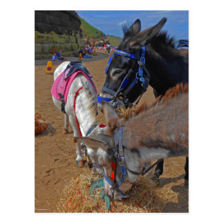 Whitby Donkeys Postcard