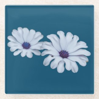White African Daisies Glass Coaster