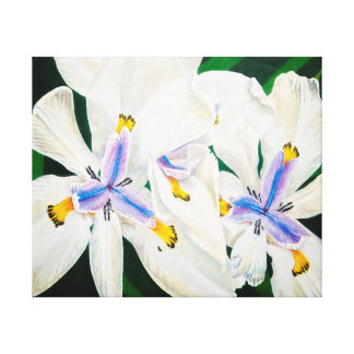White African Iris Canvas Print