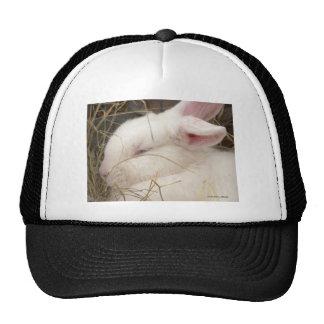 White albino netherland dwarf rabbit head hat