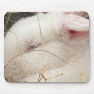White albino netherland dwarf rabbit head mousepad