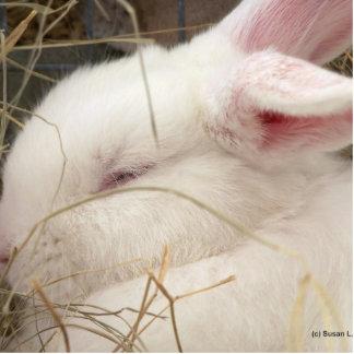 White albino netherland dwarf rabbit head photo sculpture magnet