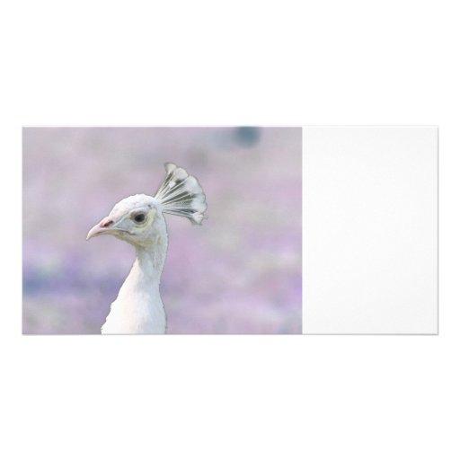 White albino peacock against purple back photo greeting card