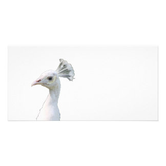 White albino peacock head cutout custom photo card