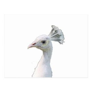 White albino peacock head cutout post card