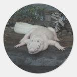 white alligator round sticker