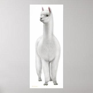 White Alpaca Print