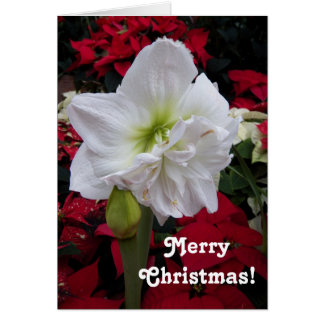 White Amaryllis Floral Christmas Card