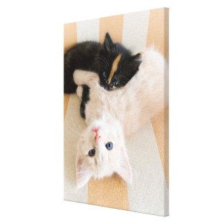 White And Black Kitten Lying On Sofa Canvas Print