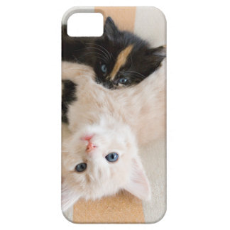 White And Black Kitten Lying On Sofa iPhone 5 Cover