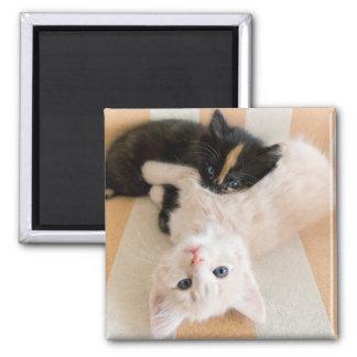 White And Black Kitten Lying On Sofa Magnet