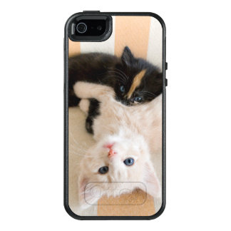 White And Black Kitten Lying On Sofa OtterBox iPhone 5/5s/SE Case