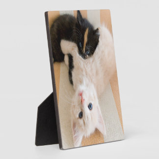 White And Black Kitten Lying On Sofa Plaque