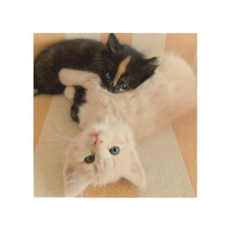 White And Black Kittens Wood Wall Art