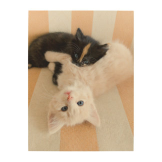 White And Black Kittens Wood Wall Decor