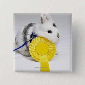 White and black rabbit on blue leash with yellow 15 cm square badge