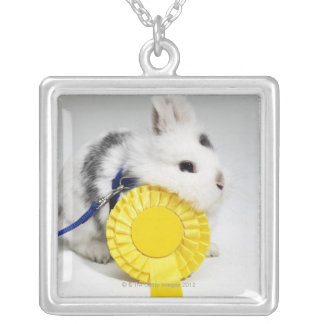 White and black rabbit on blue leash with yellow silver plated necklace