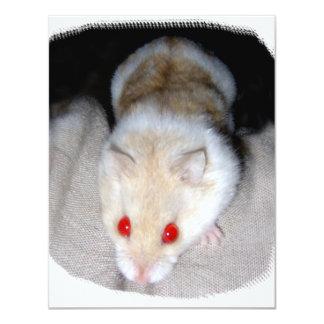 White and blonde albino hamster picture announcement
