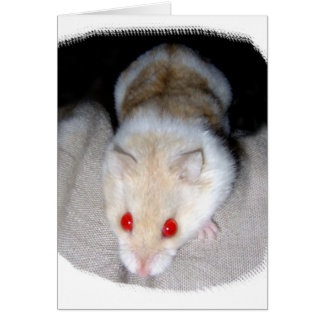 White and blonde albino hamster picture note card