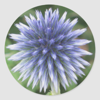 White and Blue Globe Thistle Sticker