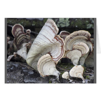 White and Brown Shelf Mushrooms Greeting Card