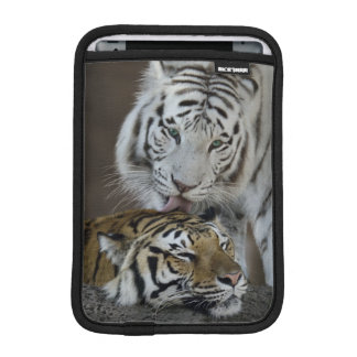 White And Brown Tigers Resting iPad Mini Sleeves