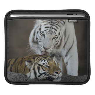 White And Brown Tigers Resting iPad Sleeve