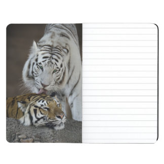 White And Brown Tigers Resting Journal