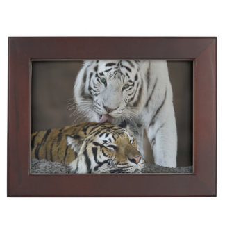 White And Brown Tigers Resting Keepsake Box