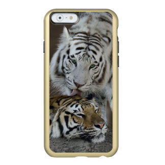 White And Brown Tigers Resting Incipio Feather® Shine iPhone 6 Case
